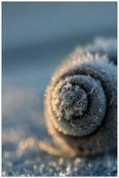 Frozen Spirals by MushroomMagic