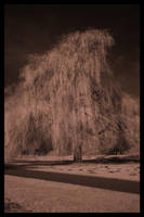Willows by MushroomMagic