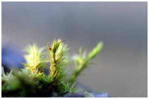 Little Things by MushroomMagic