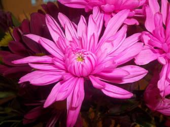 Flower 25 by AkaSherlock