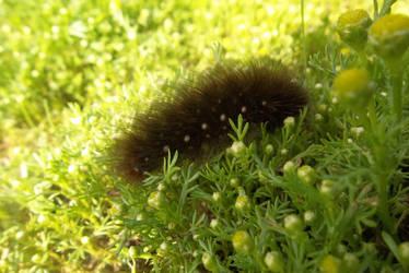 Caterpillar by AkaSherlock