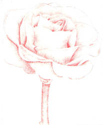 Intaglio Red Rose by MoonlightRomance16