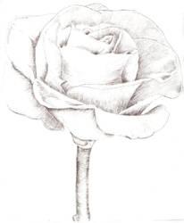 Intaglio Black Rose by MoonlightRomance16