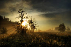 Sense of Fall IV by Seselgis