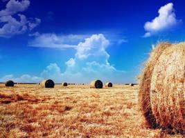 Longhorn hay-rolls by MohsinNaqi