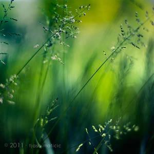 greenalize by tjasa