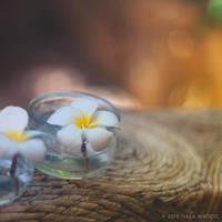 frangipani by tjasa
