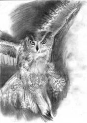 owl by Satyu