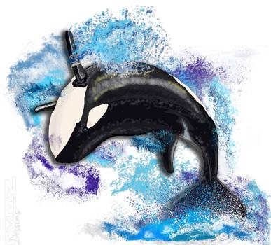 Killer Whale Dance Wwwgenialfotocom