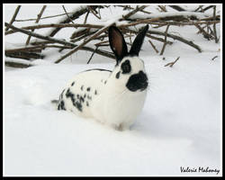 Bunny in the Brush by twiagain