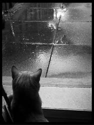 Taking a Rain Check by smallness