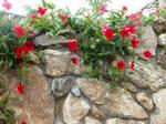Wallflower by HauntingVisionsStock