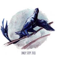 DrawDinovember Day 22 Microraptor by EmilyStepp