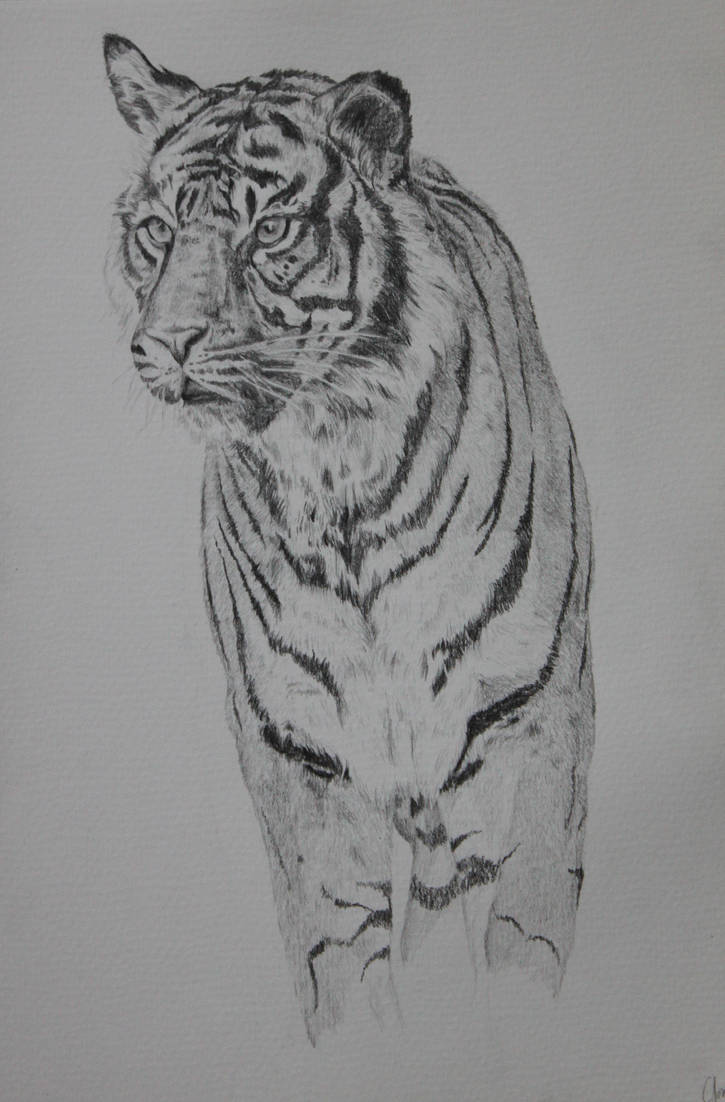 Tiger by Feagaer