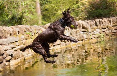 Dillon The Dog Jumps by Feagaer