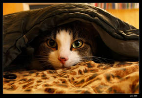 Cats 055 by vaim-p