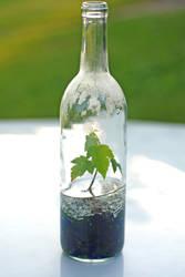 Bottle Tree by amwtm