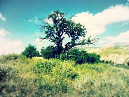 Tree by Aminebjd