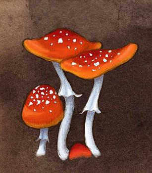 Commemorative Mushrooms by kashuarashi