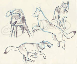 Wolves Sketches 4 by Psamophis