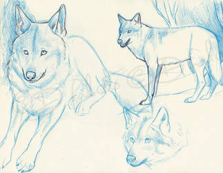 WolvesSketches3 by Psamophis