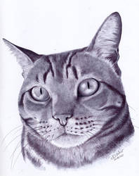 Bolota portrait by Psamophis