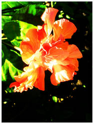 Flower Power by dipoledipole