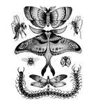 creepy crawlies by parrotte