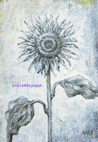 White sunflower4 by NikiAndo