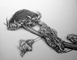 SANGE (Falling Like Flowers) by NikiAndo