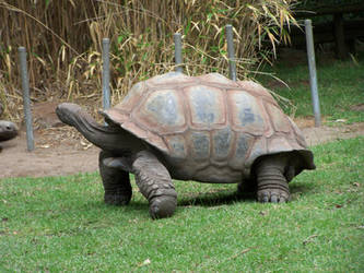 Tortoise4-Stock by SilkenWebs