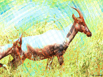 Antelope by Delduthling