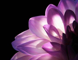 Gentle Persuasion by TruemarkPhotography