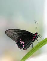 Butterfly 09 by TruemarkPhotography