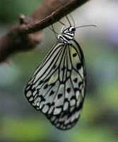 Butterfly 27 by TruemarkPhotography