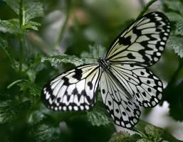 Butterfly 04 by TruemarkPhotography