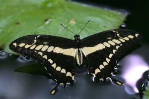 Butterfly 05 by TruemarkPhotography