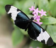 Butterfly 15 by TruemarkPhotography