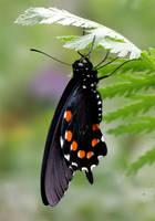 June Butterfly 01 by TruemarkPhotography