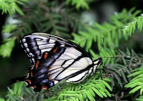 June Butterfly 02 by TruemarkPhotography