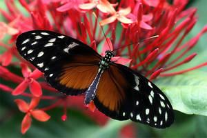 June Butterfly 07 by TruemarkPhotography