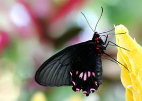 June Butterfly 16 by TruemarkPhotography