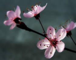 P.L.U.M. Blossoms 2 by TruemarkPhotography