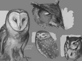 Owls Everywhere by CorvusHound