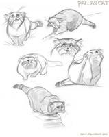 Pallas Cats by kayjkay