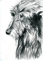 Charcoal Wolfhound by jamysketches