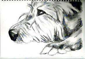 Wolfhound- Pen by jamysketches