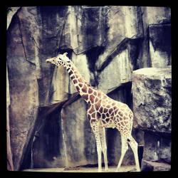 Giraffe by KailaDarling