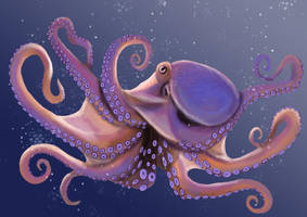 Octopus by SapphireMinx