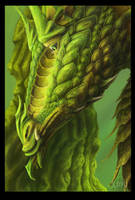 Green Dragon by Xovq